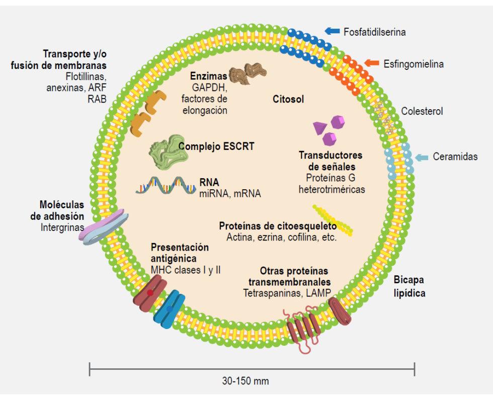 Exosomas figura 1